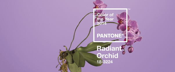 orchidee-radiant