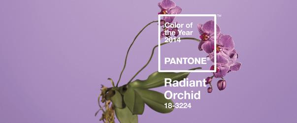 orchidee-radiant
